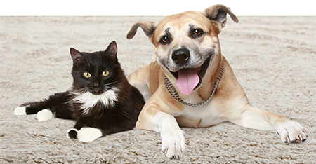 Cat and Dog sitting on a carpet - The Carpet Doctor Inc.